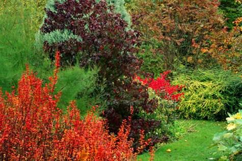 Barnsdale Gardens in Rutland