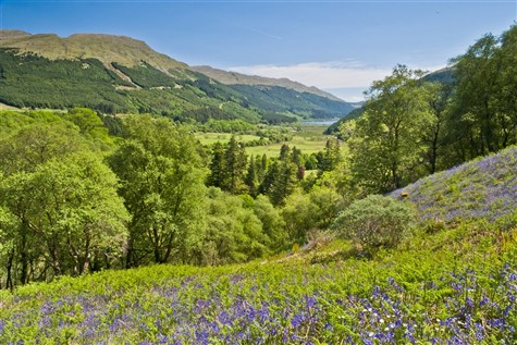 Bluebell Glades in the Trossachs & Loch Cruising