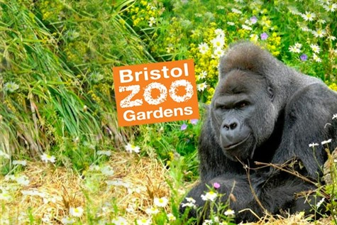 Bristol or Bristol Zoo Express Excursion