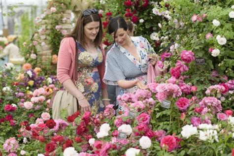 RHS Chatsworth Flower Show, Derbyshire