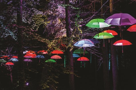 Enchanted Forest near Pitlochry in Scotland
