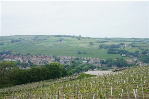 Railway Lines,Grapevines & Good Times in Yorkshire
