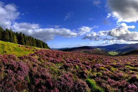 Singles Galore - Ireland's Wicklow Mountains