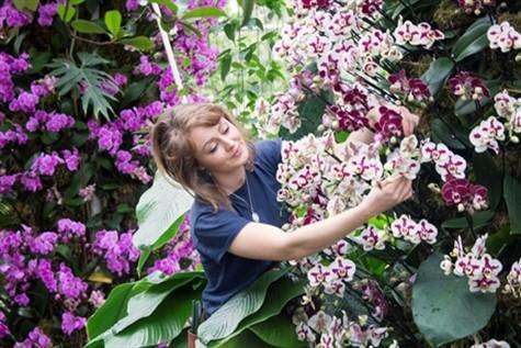 Kew Gardens Orchid Festival & Wimbledon Museum