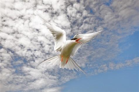 Active Traveller - Norfolk - Birds Galore!