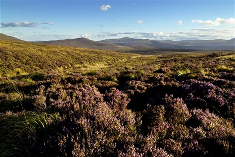 Wexford, Kilkenny & The Wicklow Mountains: Singles