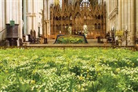 Winchester Cathedral Flower Festival