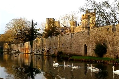 Wells & Bishops Palace Snowdrops with Soup & Sandw