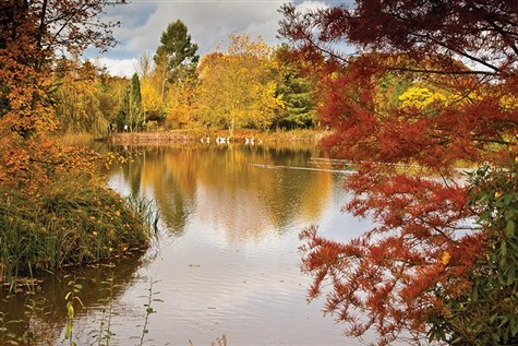 Autumn Tints at Bedenham Arboretum with High Tea