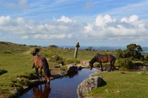 Paignton & Stunning South Devon