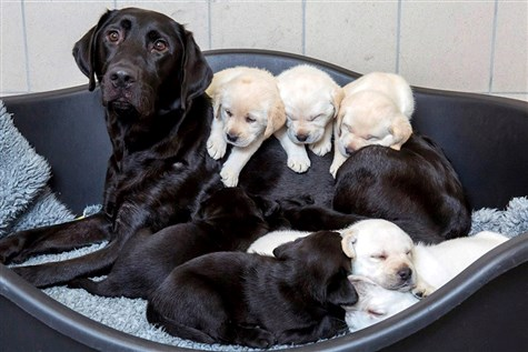 Guide Dogs Breeding Centre & Leamington