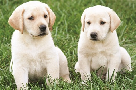 Guide Dogs and Leamington Spa