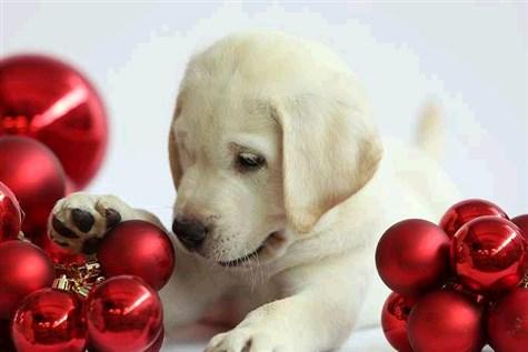 Guide Dog Breeding Centre Christmas Market
