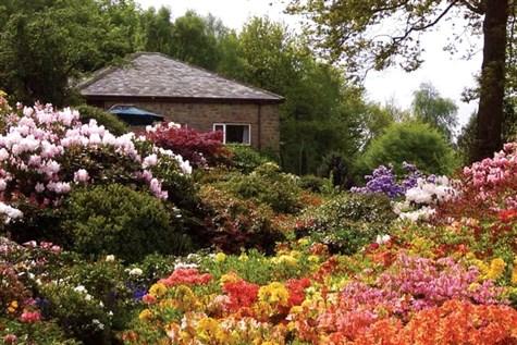 Matlock Bath & Lea Garden Rhododendrons