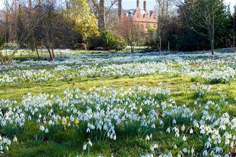 Chippenham Park Gardens Snowdrops & Cambridge