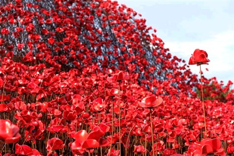 Wave: Poppies at Imperial War Museum North Express