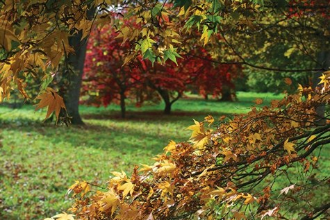 Westonbirt Autumn Colour & Christmas Charity Fair