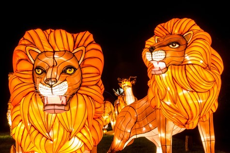 Longleat 'Festival of Light' Great Break