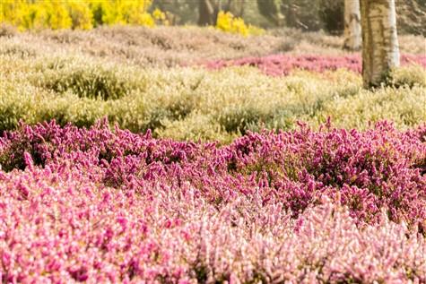 Dyffryn Gardens (NT), Vale of Glamorgan