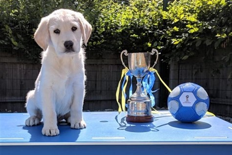 A Day in the life of Guide Dog Breeding & Training