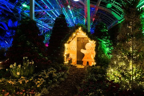 Wisley Garden RHS Illuminations & Afternoon Tea