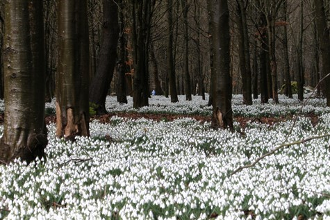 "Welford ""Snowdrop Walk"" Berkshire"