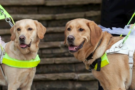 Guide Dogs Training Centre, Leamington Spa