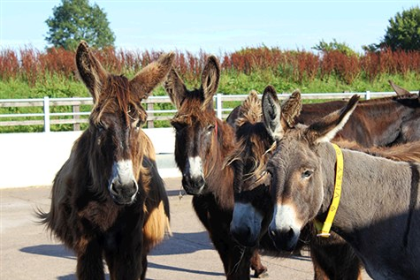 Sidmouth & Sidmouth Donkey Sanctuary Express
